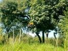 ▪️ CHÁCARA no RECREIO CAMPESTRE ▪️  *Avalia contra PROPOSTA ▪️  AT: 8.008,35 m²